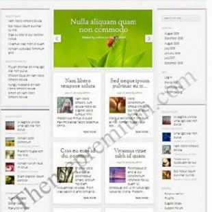 Magnificent Premium Elegant WordPress Theme with Innovative Look
